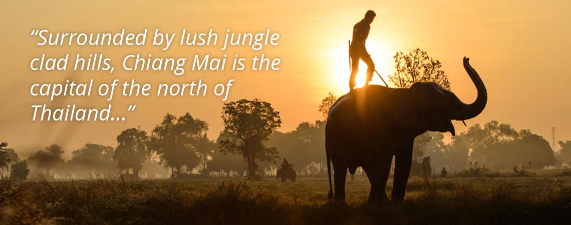chiang mai man on elephant sunset