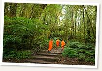 monks forest steps