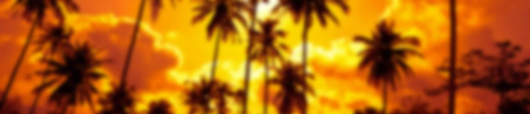 Palm Trees Sunset Slide 3