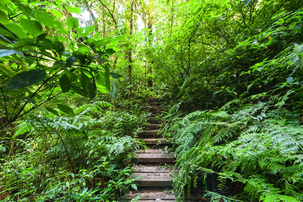 Footpath into the jungle