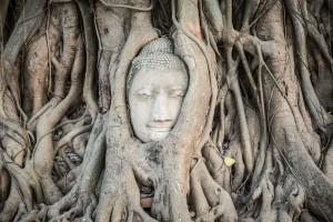 buddha head bodhi tree wat mahathat ayutthaya