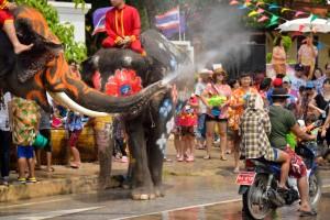 songkran thai new year water festival lephants