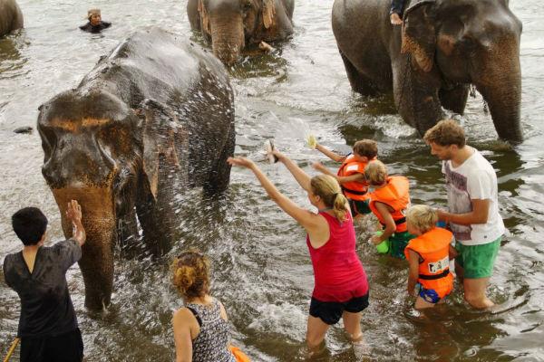 bathing elephants elephantsworld kanchanaburi
