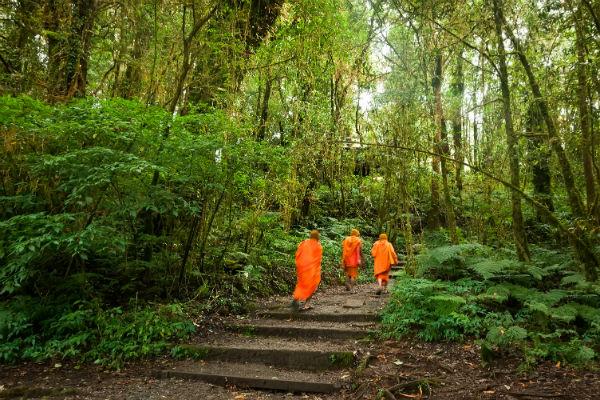 buddhist monks jungle doi inthanon