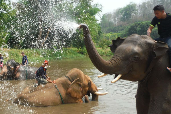 baanchang happy elephant blowing water
